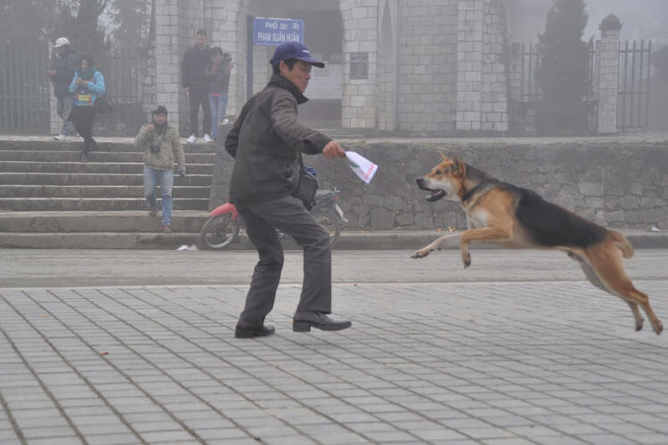 Man playing with his dog, Vietnam